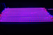 Alibaba 60 90 120cm Led grow bar cheap led grow lights to replace T5 T8 tube led grow light bar