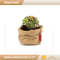 Kraft Paper Planter, Popular Washable Kraft Paper Planter Bag