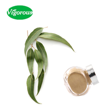 Free sample high quality 3%Rutin eucalyptus extract/rutin powder