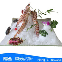 HL002 best quality fresh frozen red shrimp and seafood