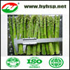 IQF Frozen Asparagus Green cuts spears
