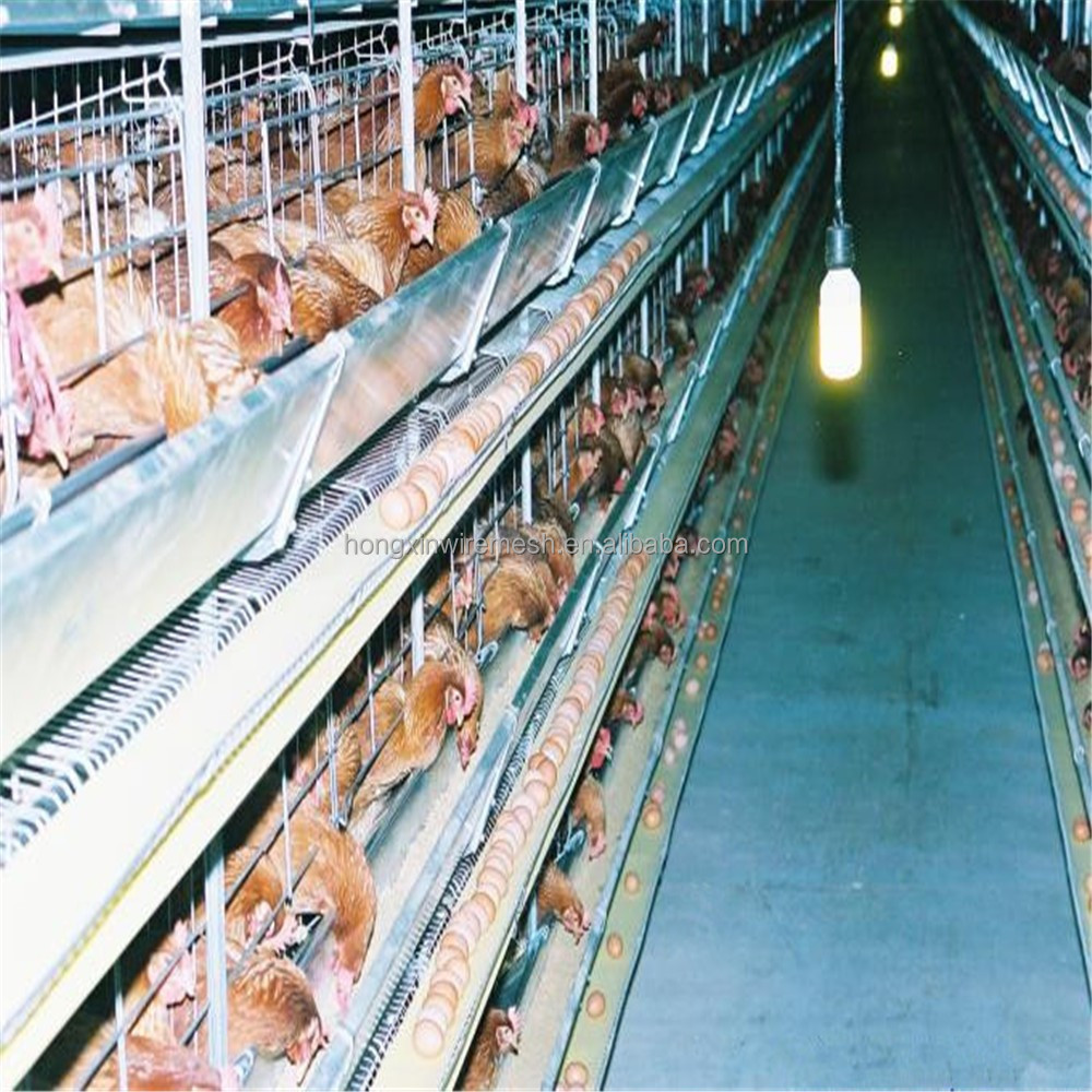 automatic layer chicken cage battery laying hens factory