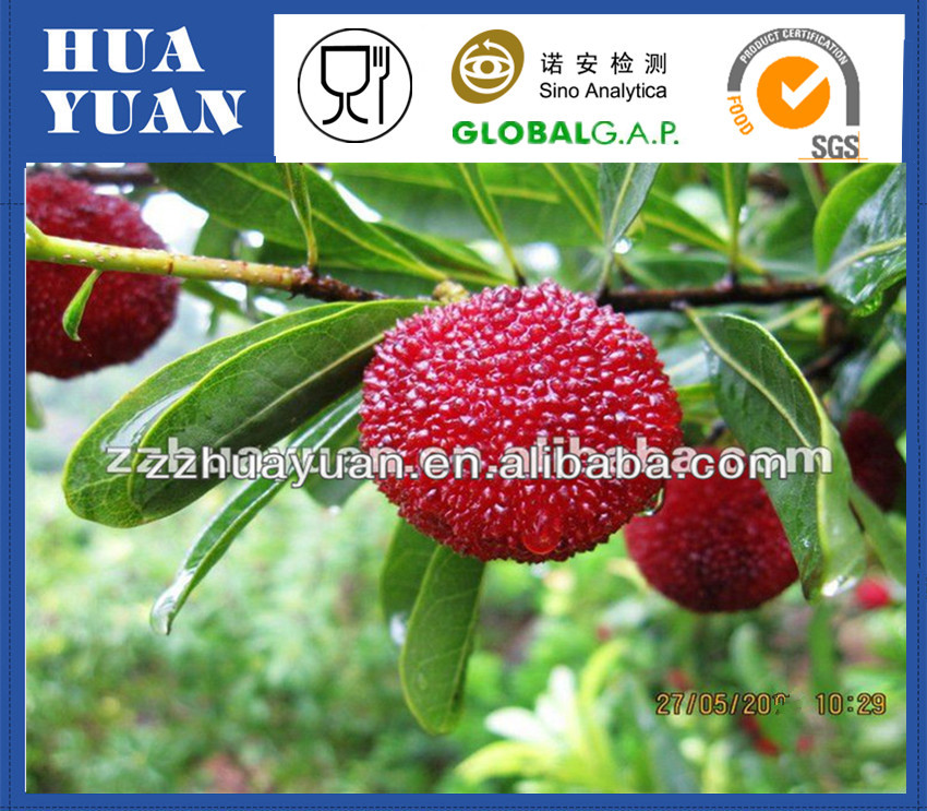 Fresh High Quality Chinese Yangmei Black pulp waxberry