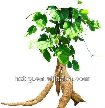 High quality kudzu extract/ puerarin