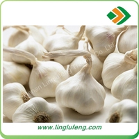 Cold storking fresh natural normal white garlic with wholesale price