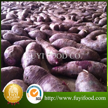 Supplier Fresh Purple Sweet Potato For Buyers