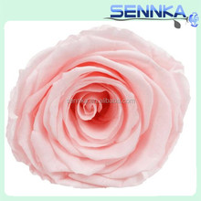 Perennial Flowering Plant Fresh Cut Roses Preserved Fresh Flower For Wedding Decoration