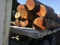 Doussie Logs and sawn beams , railway sleepers and out doors sawn timber