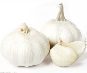 vegetable high quality fresh white garlic 2018 wholesale
