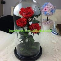 Quality Assurance flower glass vase clear decorative wholesale preserved for gift packaging