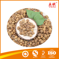 Wholesale price apricot kernels