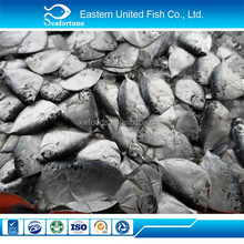 Wholesale Food Frozen New Season Fresh Fish John Dory