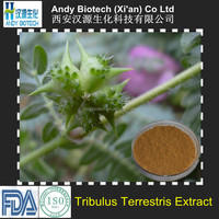100% Natural Saponins GMP Tribulus Terrestris Extract
