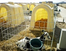 Custom High Grade Calf hutch, Calf Cages, Cow Houses