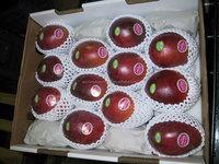 U.S. Market Popular Food Safety Standard FDA Certificate Factory Price China Supplier/EPE/Apple/Fruit Foam Net