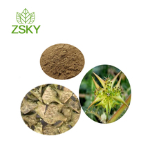 GMP Factory Supply Free Sample Standardized Tribulus Terrestris Extract Powder 60 Saponins