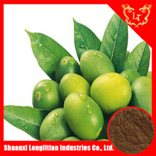 Pure olive leaf powder extract ,olive friut powder extract,antiaging product