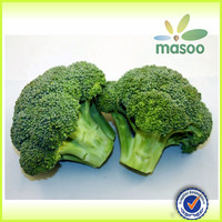 New Fresh Reid Farms Broccoli For Exporting A Grade