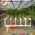 Agriculture Aquaponics Hydroponic Growing System For Planting Wholesale