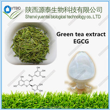top quality 95% EGCG green tea extract / instant green tea powder