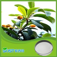 Top quality 98% corosolic acid loquat leaf extract