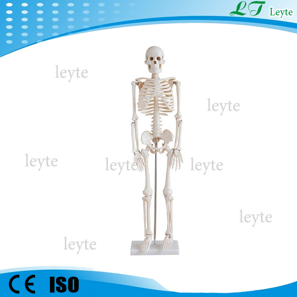 XC-102 cheap plastic human skeleton model