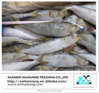 Wholesale Sardine Seafood Fish