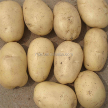 Wholesale price of fresh potato