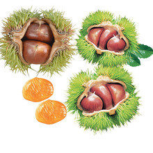Fresh wholesale Chinese chestnut