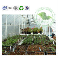Eco Friendly Transparent PVC Tunnel Greenhouse