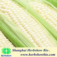 White Waxy Corn Seeds For Sale