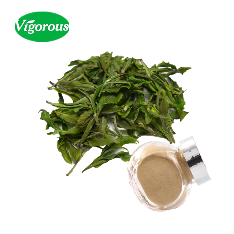 white tea extract/organic white tea extract/white tea p.e.