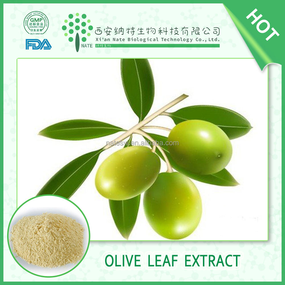 Anti-aging Olive Leaf extract /olive leaf extract powder 100% pure natural FREE sample
