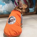 Bulldogs Sweater dog clothes