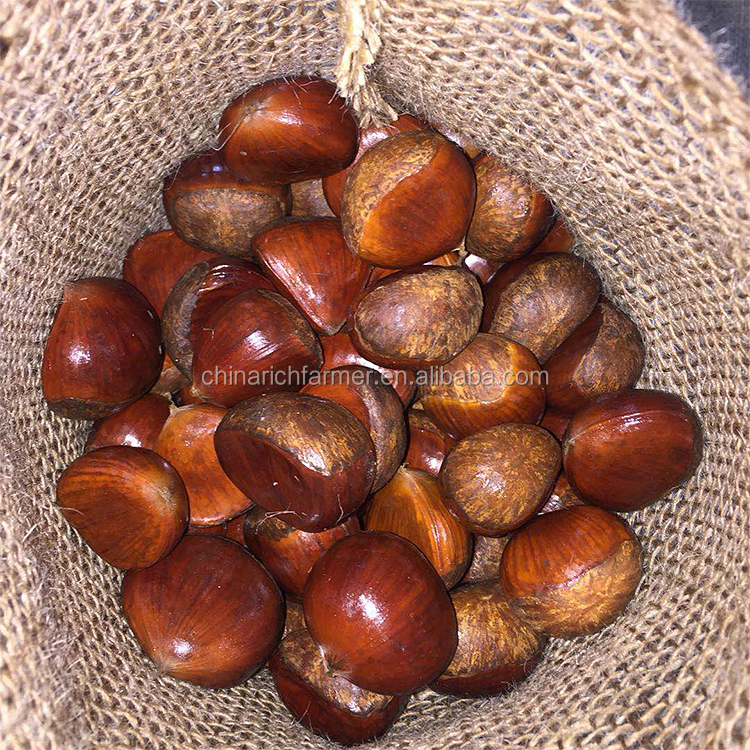 china fresh chestnut for usa price