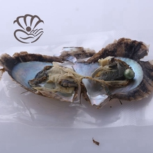 Wholesale akoya oyster shell with a 6-7mm green round freshwater loose pearl