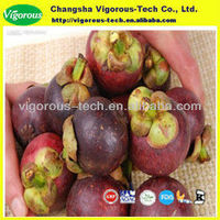 Dried Mangosteen rind extract/alpha mangosteen extract/Mangostin10%-40%