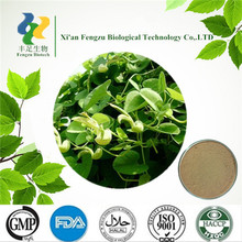 Pure herbal medicine Aristolochia debilis extract