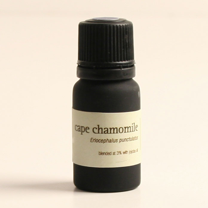 Cape Chamomile Essential Oil with 100% pure natural flower oil--826003