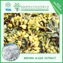 Hot sales Brown Algae Powder 40% Kelp Extract Kelp Fucoxanthin