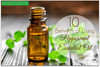 /product-detail/peppermint-body-massage-natural-pure-essential-oil-60567173261.html