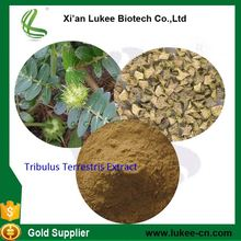 Supplier Yucca Extract tribulus terrestris saponins /soy saponins /Manufacturer Yucca Extract supplier