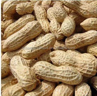raw peanuts in shell EU aflatoxin less 4