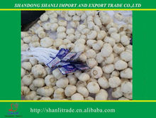 The price of fresh garlic in china market (3pcs small packing)