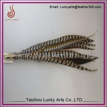 Taizhou lucky arts factory wholesale different pheasant feathers