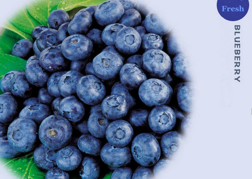 Wild Blueberry Powder , Blueberry Extract Powder