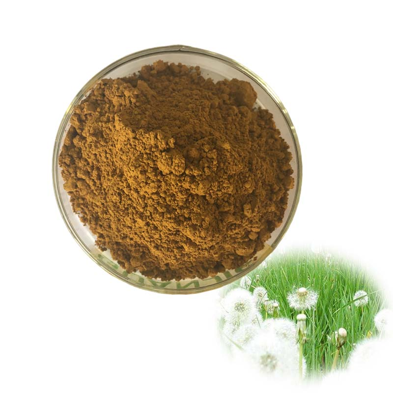 Factory Supply Pure Natural Dandelion Extract / Dandelion Root Extract