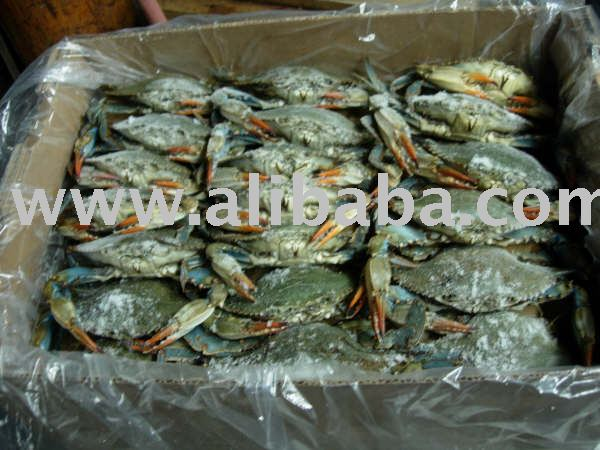 Frozen WR Blue Crab (callinectes sapidus) from USA