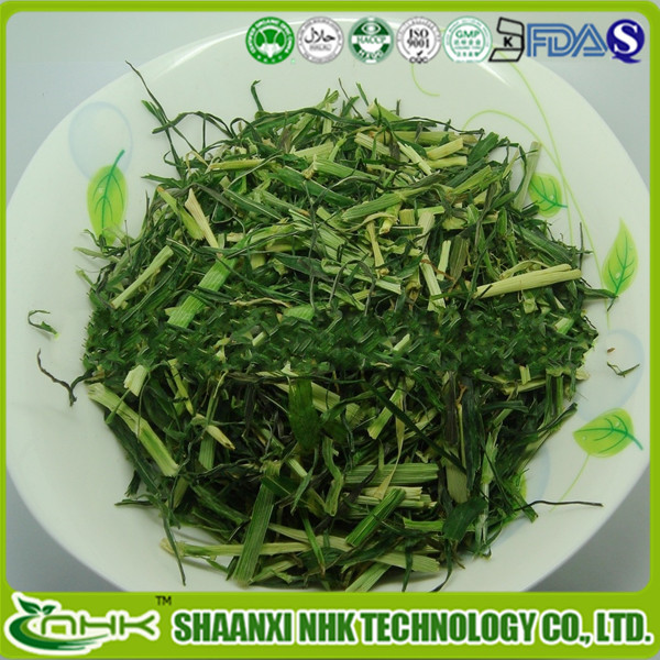 Best Price Barley Grass Powder / Barley Green / Barley Leaves Powder