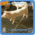 Pig feeding bed/Pig bed mesh